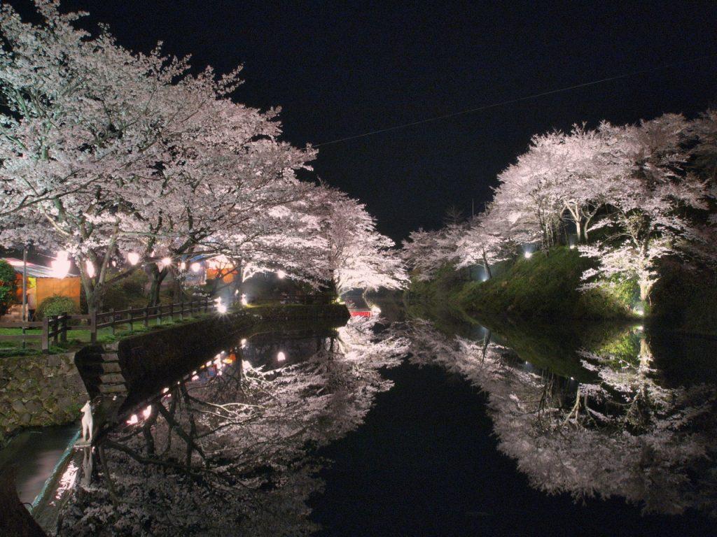 鹿野城跡公園の夜桜