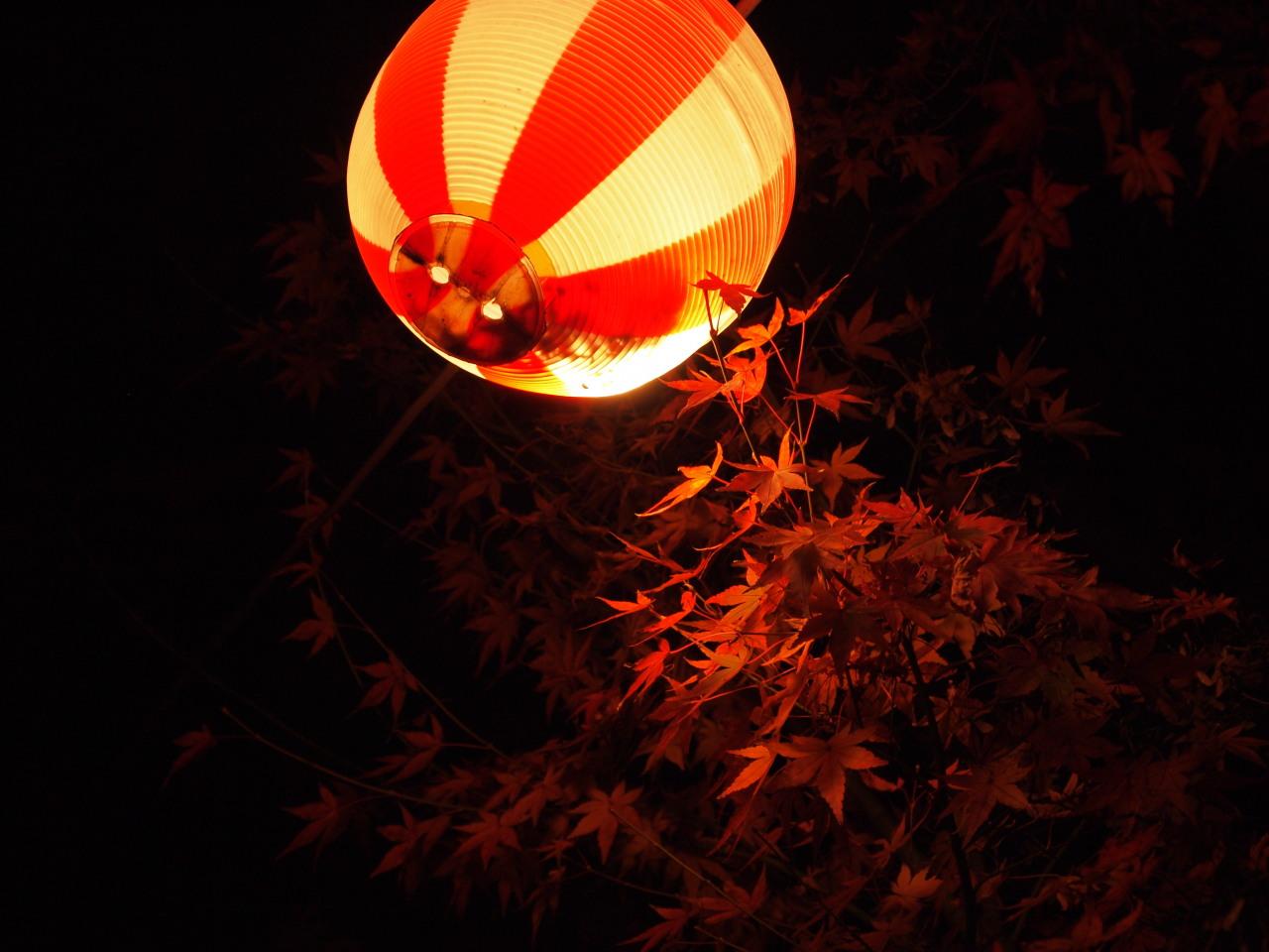 紅葉と提灯