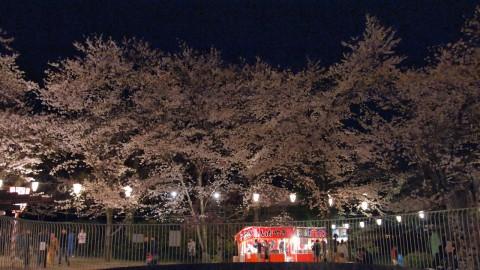 打吹公園の夜桜